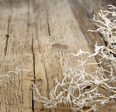 Abstract the old wood background — Stockfoto