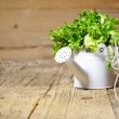 Fresh herbs on a rustic table in late day sunlight — Stock Photo