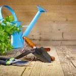 Gardening tools — Stock Photo #42175973