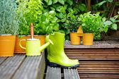 Utomhus trädgårdsredskap — Stockfoto