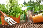 Herramientas de jardineria — Foto de Stock