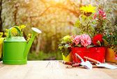 Outils de jardinage en plein air — Photo