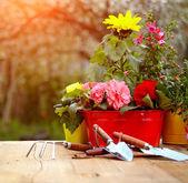 Outdoor gardening tools — Stock Photo