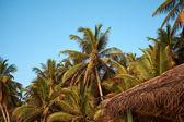 Palm boom blauwe hemel — Stockfoto