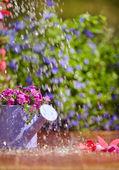 Bahçe sulama tesisleri — Stok fotoğraf