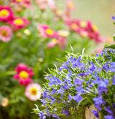 Garden flowers background — Stock Photo