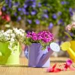 Gardening tools — Stock Photo #46424721