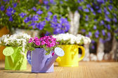 Gartengeräte — Stockfoto