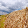 Hay bales — Stock Photo #47922985