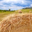 Hay bales — Stock Photo #47922987