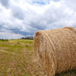 Hay bales — Stock Photo #47922991