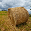 Hay bales — Stock Photo #48096213