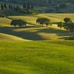 primavera colline Toscana — Foto Stock #48099443