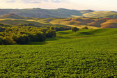 Countryside, San Quirico d'Orcia — Stock Photo