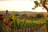 Tuscany vineyards in fall — Stock Photo