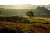 Hills of Tuscany in the morning — 图库照片