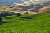 Hills of Tuscany in the morning — Stockfoto