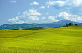 Green wheat on blue sky background — Stock Photo
