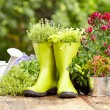 Outdoor gardening tools and flowers — Stock Photo #50145855