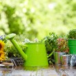 Outdoor gardening tools and flowers — Stock Photo #50145891
