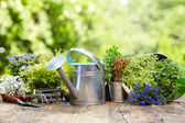 Outdoor gardening tools and flowers — Stock Photo