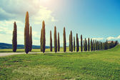 Typical tuscan countryside — Foto de Stock