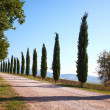 Country road in Tuscany — Stock Photo #51502055