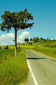 Country road in Tuscany — Stock Photo