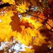 Colorful background of fallen autumn leaves — Stok fotoğraf #7475339
