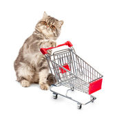 Cat with a cart — Stock Photo