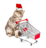 Cat in a Christmas cap with a cart — Stock Photo