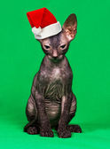 Kitten in a Christmas hat — Stock Photo