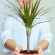Smiling office worker girl holding a potted plant - Stock Photo