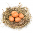 Brown eggs in a nest on a white — Stock Photo
