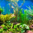 Interior aquarium — Stock Photo
