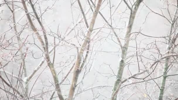 Nieve y viento — Vídeo de stock