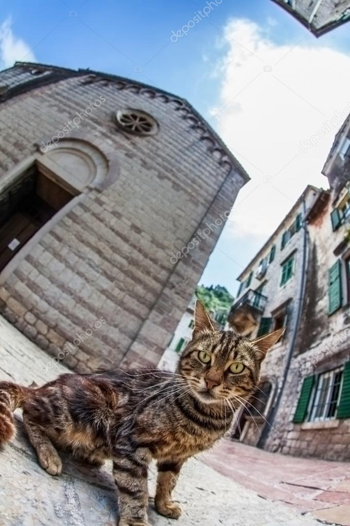 Fish-eye lens look of the old city on sky background. Kotor. Montenegro  Stock Photo #12889425