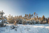 Winter field under blue sky — Stock fotografie