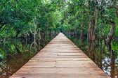 Wooden bridge in the jungle. — Stock Photo