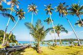 Exotic tropical beach. — Stock Photo