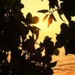 Stockvideo: Tropical sunset