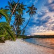 Tropical beach at sunset. — Stock Photo #17396213