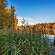Autumnal lake near the forest — Foto Stock