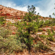 Slopes of Zion canyon. Utah. USA. — Stock Photo