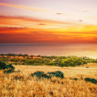 Colorful sunset around field and ocean - Stock Photo