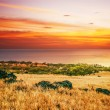 Colorful sunset around field and ocean - Stockfoto