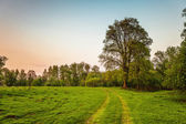 Road in sunset field — Stockfoto
