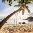 Swings and palm on the sand tropical beach. — Stock Photo