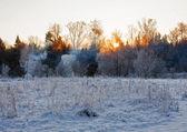 Sunset in winter field — Foto de Stock