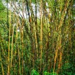 Bamboo forest. — Stock Photo